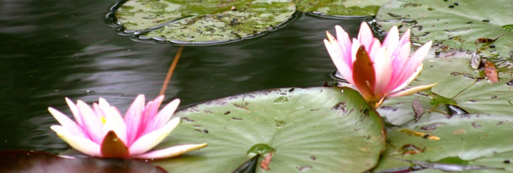 Waterlilies of Giverny