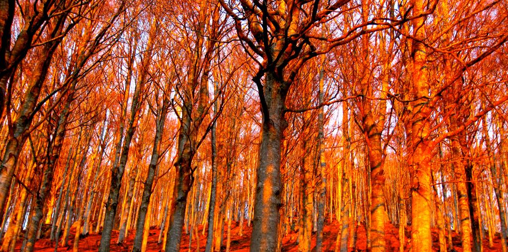 Monte Amiata sunset trees