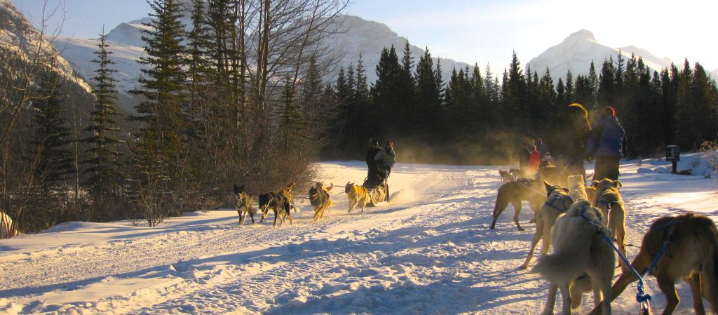 Dogsledding near Canmore